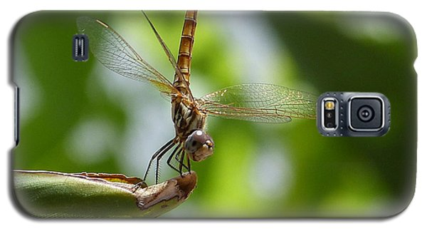 Galaxy S5 Case featuring the photograph Dragonfly by Janina  Suuronen