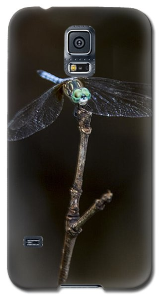 Dragonfly On Branch Galaxy S5 Case
