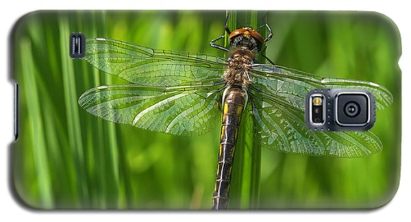 Dragonfly On Grass Galaxy S5 Case