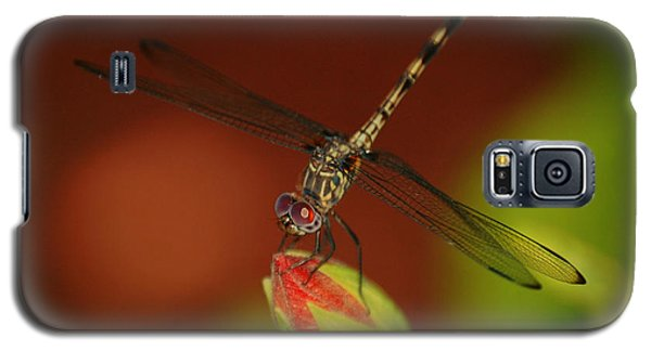 Galaxy S5 Case featuring the photograph Dragonfly On Hibiscus by Leticia Latocki