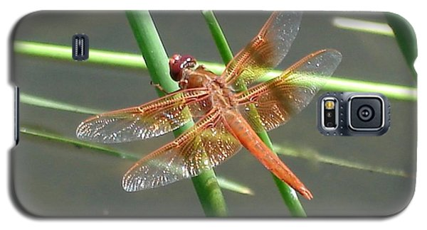 Galaxy S5 Case featuring the photograph Dragonfly Orange by Kerri Mortenson