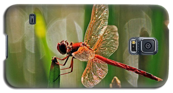 Dragonfly Profile Galaxy S5 Case