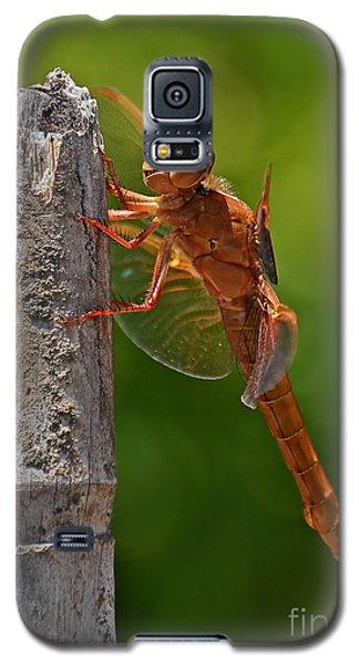 Dragonfly Resting Galaxy S5 Case