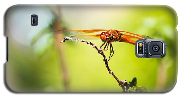 Galaxy S5 Case featuring the photograph Dragonfly Smile by Priya Ghose