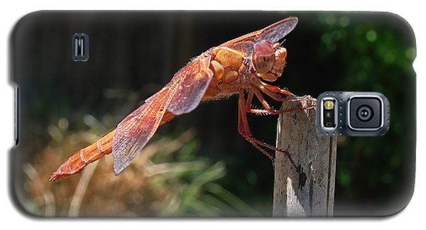 Dragonfly Stretching Galaxy S5 Case