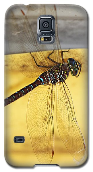 Galaxy S5 Case featuring the photograph Dragonfly Web by Melanie Lankford Photography
