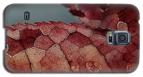 Galaxy S5 Case featuring the photograph Dragon's Spine by Kenny Glotfelty