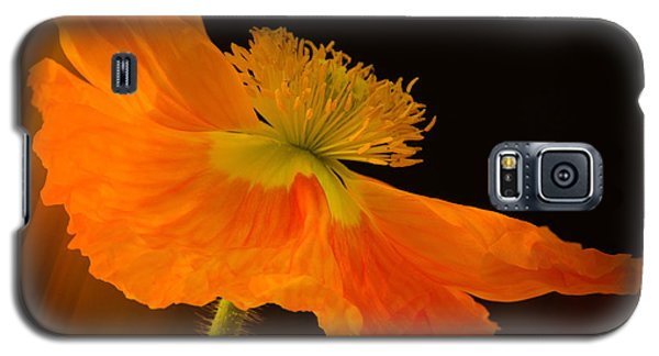 Dramatic Orange Poppy Galaxy S5 Case by Don Schwartz
