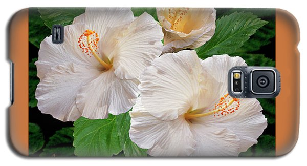 Dreamy Blooms - White Hibiscus Galaxy S5 Case by Ben and Raisa Gertsberg