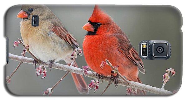 Dreamy Redbirds Galaxy S5 Case