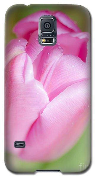 Dreamy Tulip Galaxy S5 Case by Dee Cresswell