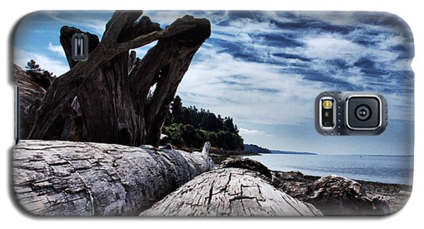 Driftwood In Teddy Bear Cover Galaxy S5 Case