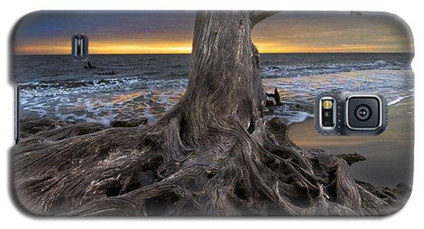 Driftwood On Jekyll Island Galaxy S5 Case