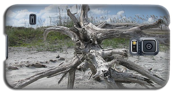 Driftwood Tree Galaxy S5 Case