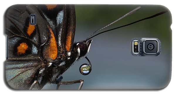 Galaxy S5 Case featuring the photograph Drinking Dew Drops 3 by David Lester