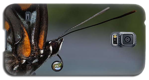 Galaxy S5 Case featuring the photograph Drinking Dew Drops 5 by David Lester
