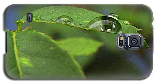 Drop Leaf Galaxy S5 Case