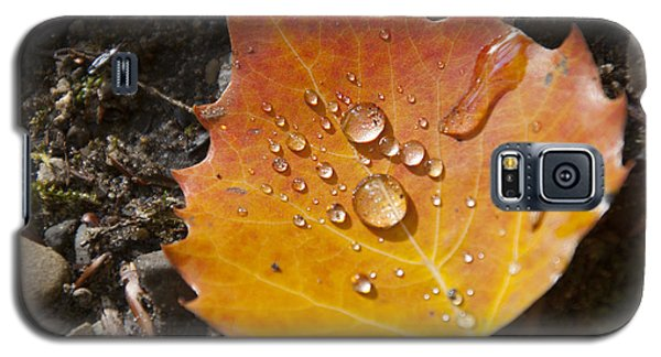 Droplets In Autumn Leaf Galaxy S5 Case