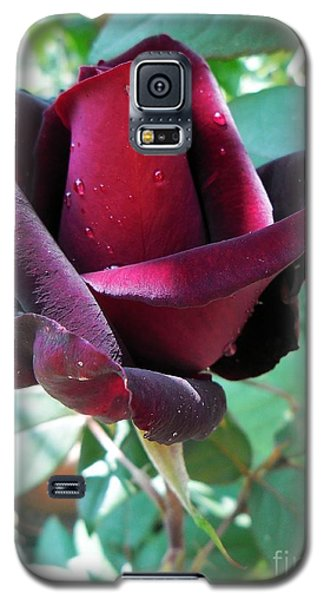 Galaxy S5 Case featuring the photograph Droplets On The Petals by Vesna Martinjak
