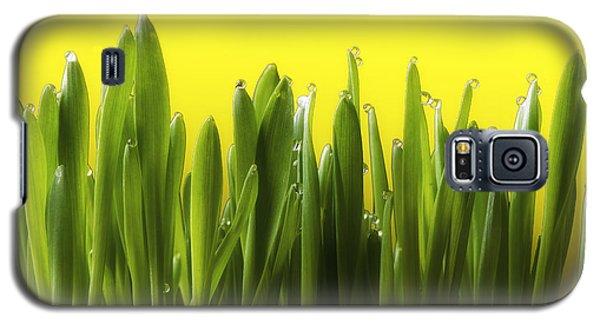 Drops Of Spring Galaxy S5 Case