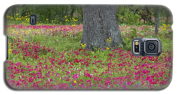 Drummonds Phlox And Crown Tickweed Central Texas Galaxy S5 Case