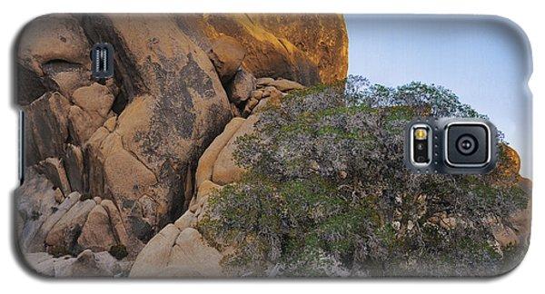 Dry Wash Oak Tree Galaxy S5 Case