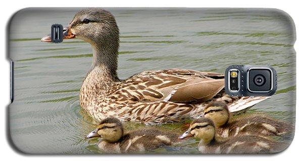Duck Family Galaxy S5 Case