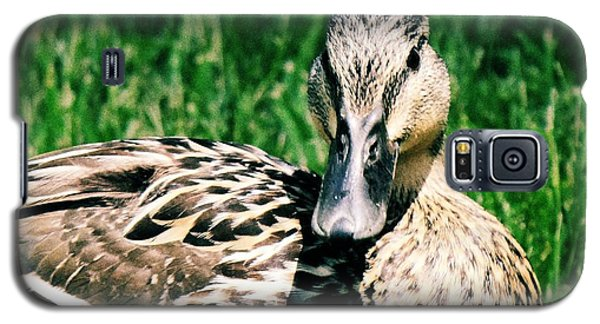 Galaxy S5 Case featuring the photograph Duck by Lisa Brandel