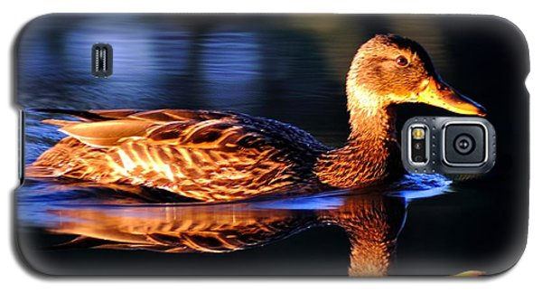 Duck On A River With Refletion Galaxy S5 Case by Todd Soderstrom