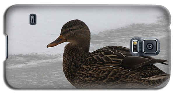 Galaxy S5 Case featuring the photograph Duck On Ice by John Telfer