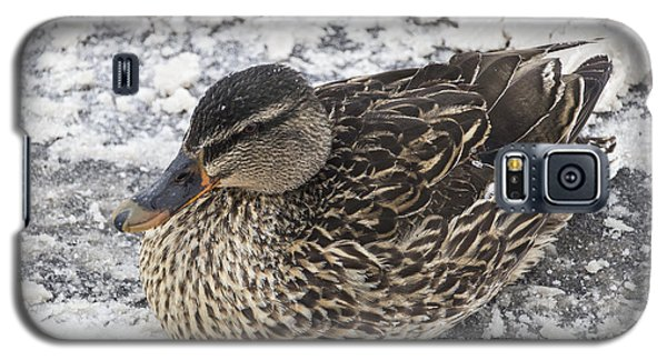 Duck Setting On A Winter Road Galaxy S5 Case