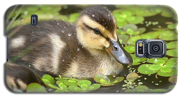 Duck Soup 3 Galaxy S5 Case
