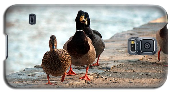 Galaxy S5 Case featuring the photograph Duck Walk by David Jackson