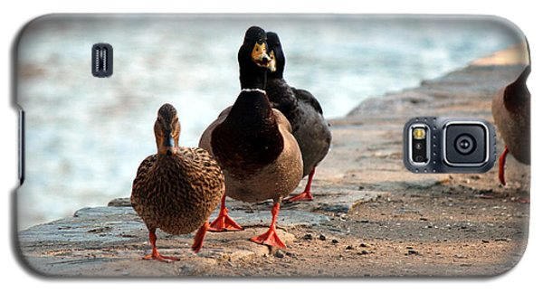 Duck Walk Galaxy S5 Case