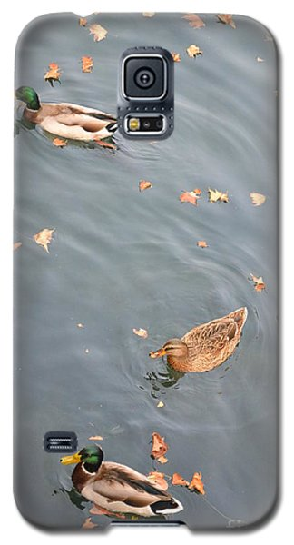 Ducks And Autumn Leaves Galaxy S5 Case
