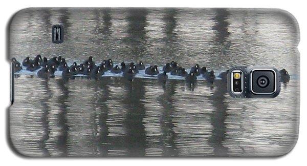 Ducks In Water Galaxy S5 Case by Patricia Januszkiewicz