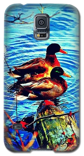 Galaxy S5 Case featuring the photograph Ducks On A Log by Tara Potts