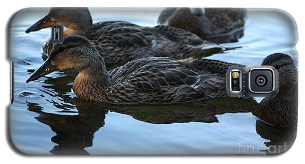 Ducks Reflecting Galaxy S5 Case