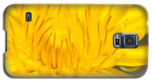 Dulcet Dandelion Galaxy S5 Case by Len Romanick
