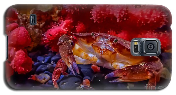 Dungeness Crab Galaxy S5 Case