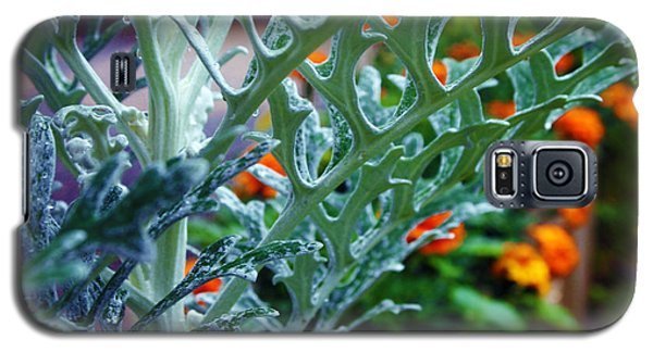 Galaxy S5 Case featuring the photograph Dusty Miller And Dew Drops by Deborah Fay