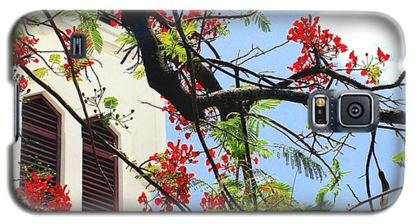 Duval Street Flame Tree Galaxy S5 Case by Valerie Reeves