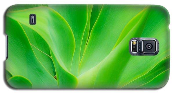 Dwarf Agave Galaxy S5 Case