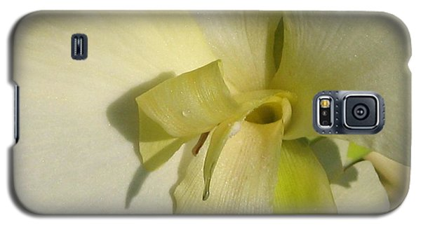 Galaxy S5 Case featuring the photograph Dwarf Canna Lily Named Ermine by J McCombie