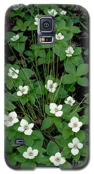 Galaxy S5 Case featuring the photograph Dwarf Dogwood by Doug Herr