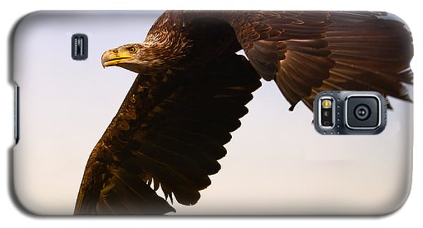 Eagle In Flight Galaxy S5 Case
