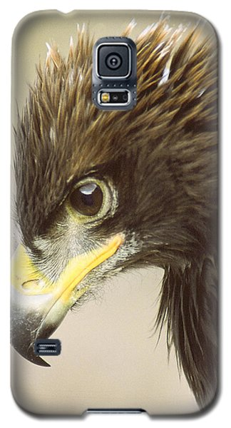 Galaxy S5 Case featuring the photograph Eagle In Profile by Jim Snyder