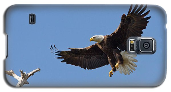 Galaxy S5 Case featuring the photograph Eagle Landing 2 by Phil Stone