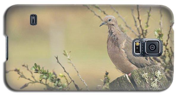 Eared Dove Galaxy S5 Case
