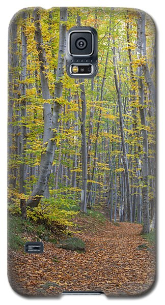 Galaxy S5 Case featuring the photograph Early Autumn Vitosha Mountain Forest Bulgaria by Jivko Nakev